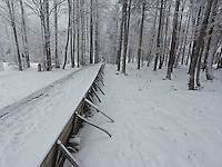 FOREST_LOCATION_90156