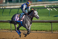 Midnight Lucky, trained by Bob Baffert, during morning workouts for the Kentucky Oaks at Churchill Downs in Louisville, Kentucky on April 30, 2013.