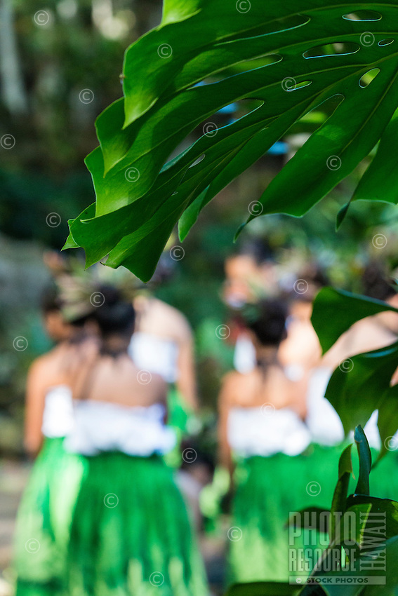 Young hula dancers at a recital in Waimea Valley, O'ahu.