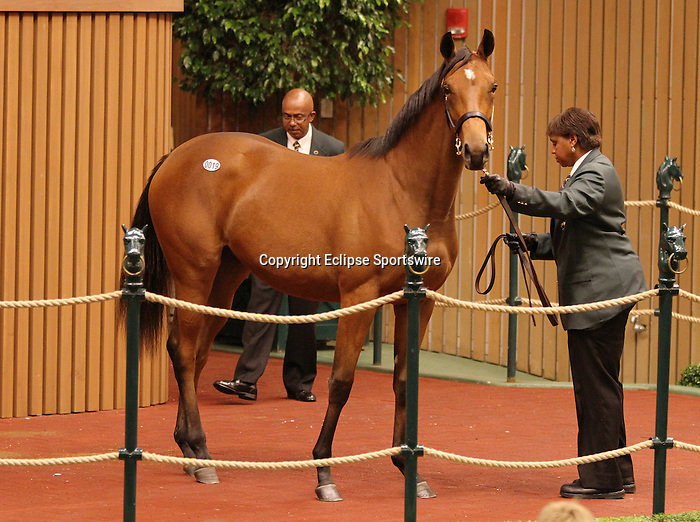Hip #19 Galileo - Sharp Lisa  at the Keeneland September Yearling Sale.  September 10, 2012.