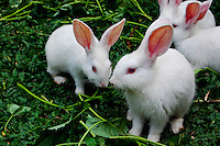 Natural sc Rabbits