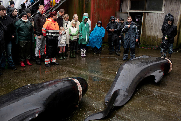 A speaker discusses how whales are killed and slaughtered at the Seaman's Day celebration in Klaksvík on August 21, 2010.