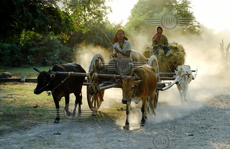 Peasants coming back to their village at dusk from the fields.