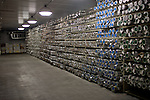Archive: Antarctic Ice Core