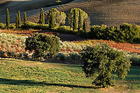 Agricultural field at sunset, San Quirico d'Orcia, Tuscany, Italy