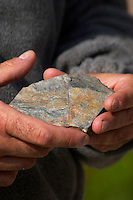 Rocks in the hand. Llicorella soil. Francesc Vernet Rigual, winemaker. Mas Igneus, Gratallops, Priorato, Catalonia, Spain.