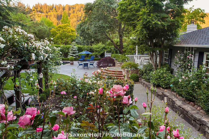 Roses in beds and pergola in backyard garden with path leading to stone patio behind house