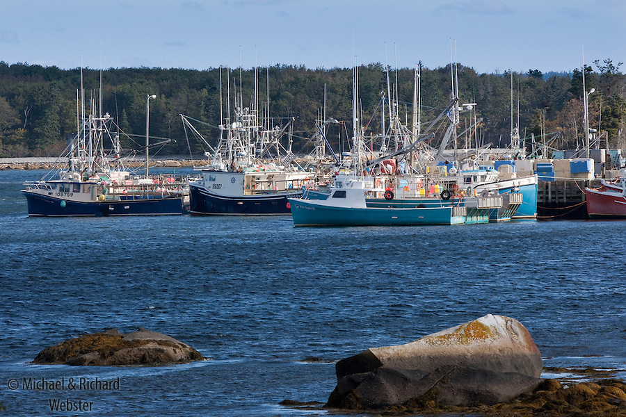 The Canadian east coast Herring fishing fleet 'tied-up' in harbour.  The fleet is not allowed out till the fishing regulatory authority have located a large enough shoal of fish.  This fleet had been waiting for two weeks for the fish to arrive on the fishing grounds. Canada, Nova Scotia, October.