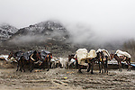 02/12/14 --  Zale Iraqi Kurdistan -- iraq-Iran border.<br /> Horses are covered with plastic sheet by the smugglers to protect the goods from the rain.