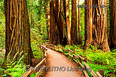 Tom Mackie, LANDSCAPES, LANDSCHAFTEN, PAISAJES, photos,+America, California, North America, Tom Mackie, USA, footpath, green, horizontal, horizontals, landscape, landscapes, path, p+athway, pathways, redwood, redwoods, tree, trees,America, California, North America, Tom Mackie, USA, footpath, green, horizo+ntal, horizontals, landscape, landscapes, path, pathway, pathways, redwood, redwoods, tree, trees++,GBTM170150-3,#L#, EVERYDAY
