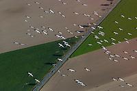 Vogelzug: EUROPA, DEUTSCHLAND, NIEDERSACHSEN 16.10.2005: Vogelzug, Kranich, Vogelschwarm, Vogelgrippe, Kraniche nutzen das gute Flugwetter, bei Uelzen nutzen die Kraniche den thermischen Aufwind um Hoehe zu Gewinnen