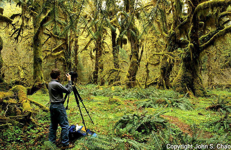 A photographer captures an image of the verdant Hoh River Rainforest, Olympic National Park, Washington State. This unique ecosystem is designated by the United Nations as a World Biosphere Reserve. (During the shoot, a cougar was confirmed to have stalked around this clearing; apparently neither photographer looked appetizing enough).....Photographed on 35mm format Velvia 50 film.