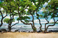 Heliotrope trees and surf on Kikaua Beach. Hawaii, The Big Island.