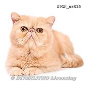 Xavier, ANIMALS, REALISTISCHE TIERE, ANIMALES REALISTICOS, FONDLESS, photos+++++,SPCHWS639,#A#