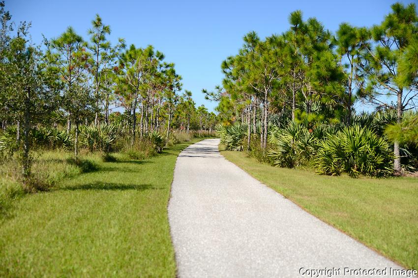 Treelined Pathway leading to wetlands located in Wellington Environmental Preserve, Wellington, Florida.