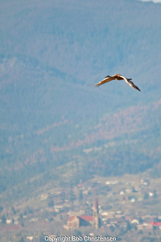 Birds in Montana