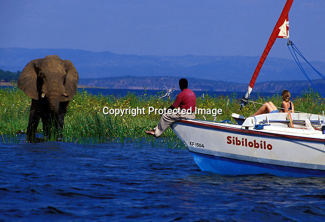 dicozim00271.African Country. Zimbabwe. A Kariba elephant walking the water as a sailing boat with tourists on April 15, 2003 on Lake Kariba, a lake in Zimbabwe. Wildlife, tourist destination, lifestyle, lake, water. .©Per-Anders Pettersson/iAfrika Photos.