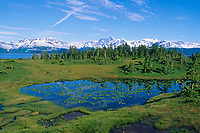 Tundra bog pond along Port Wells, Chugach Mountains, Chugach National Forest, Prince William Sound, Alaska