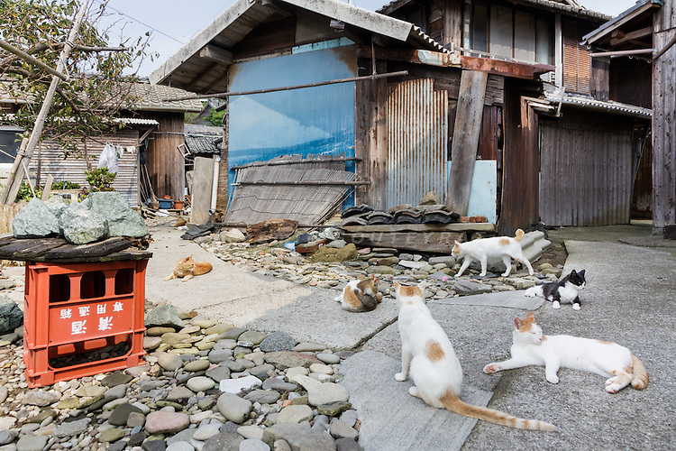 Aoshima, Ehime prefecture, September 4 2015 - Cats on the streets neat the harbour.<br /> Aoshima (Ao island) is one of the several &laquo; cat islands &raquo; in Japan. Due to the decreasing of its poluation, the island now host about 6 times more cats than residents.