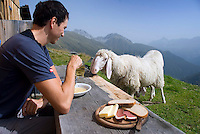 Neustift im Stubaital, Stubaier Hohenweg, Tirol, Austria, September 2008. At the Seducker Hochalm hut we stop for a welcome break and have lunch between the sheep. From the Starkenburger Hutte we hike to the Franz Senn Hut following the contours of the landscape.  Hiking the Stubai High Trail from hut to hut in the southern Alps, we clear a mountain pass on a daily basis. Photo by Frits Meyst/Adventure4ever.com.