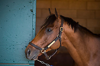 DEL MAR, CA - NOVEMBER 02: Heart to Heart, owned by Terry Hamilton and trained by Brian A. Lynch, exercises in preparation for Breeders' Cup Mile at Del Mar Thoroughbred Club on November 2, 2017 in Del Mar, California. (Photo by Jamey Price/Eclipse Sportswire/Breeders Cup)