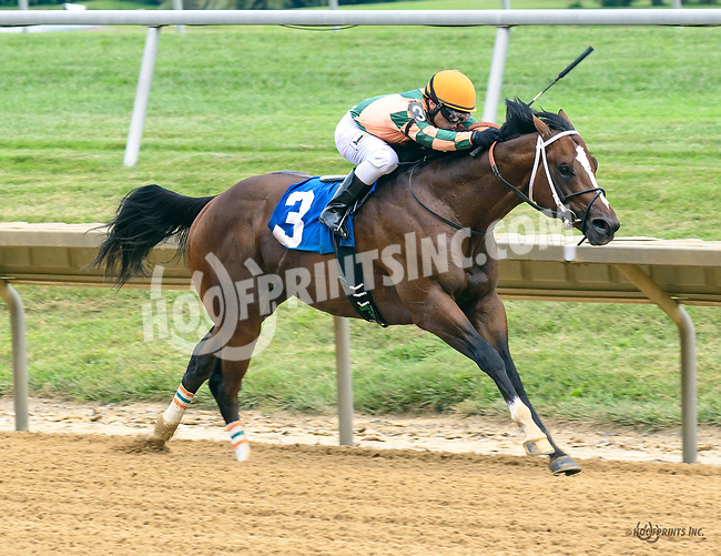 Indian Lover winning at Delaware Park on 7/22/17