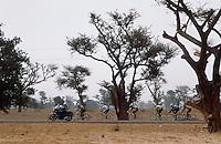 - cyclist tour of Senegal between baobab trees....- giro ciclistico del Senegal fra alberi di baobab