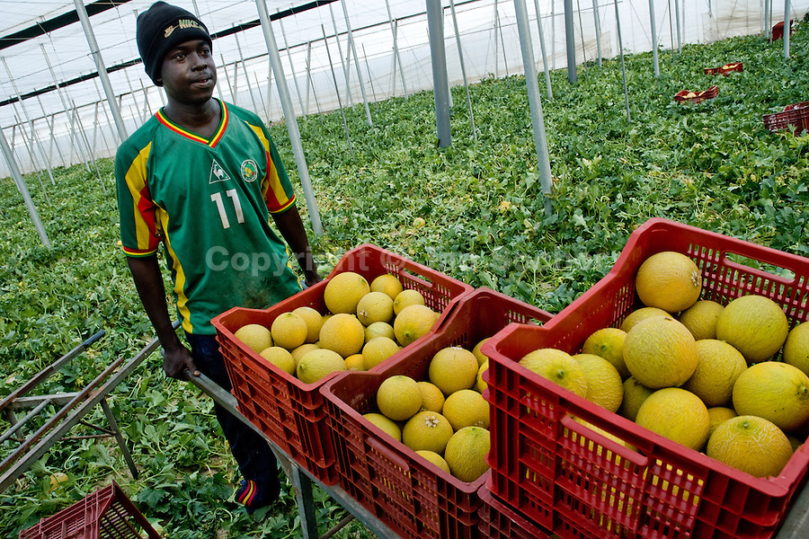 A Subsaharian immigrant from Africa pushes a hand cart full of melons in the greenhouse in El Ejido, Spain, 22 May 2007. El Ejido, a dry region on the coast of Andalusia, has changed during the last decades into the centre of vegetable production not only for the Spanish market. A half of Europe is supplied by tomatoes, peppers and melons from El Ejido. This economic miracle is from a major part based on a cheap labor force of illegal immigrants from Maghreb and Subsaharian Africa. Tens of thousands of workers keep the plastic sea of greenhouses running for the minimum wage of 30 Euros a day.