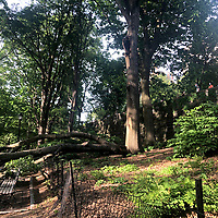 NEW YORK, USA - MAY 27: Three people get injured after a branch falls on them in Riverside Community Park in Upper West Side Manhattan on May 27,2020 in New York, USA.(Photo by Joana Toro/VIEWpress )