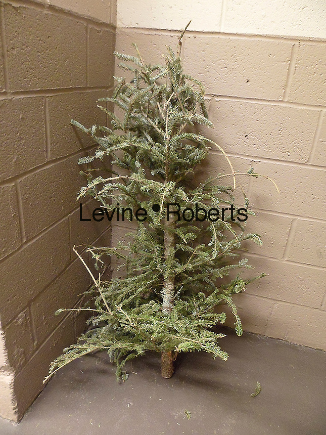 A poor, lonesome, discarded Christmas tree is seen in the trash area of an apartment building in New York on Wednesday, February 3, 2016. (© Richard B. Levine)