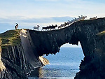 BILLY GOATS GRUFF<br /> <br /> Pictured: Who's that trip trapping over that bridge? Why, a herd of wild goats, of course making their way over a stunning natural archway overlooking the sea.   In a scene reminiscent of the Three Billy Goats Gruff fairytale, the animals make their way across the narrow path on the coast of the Atlantic Ocean.<br /> <br /> A ram keeps a watchful eye over the herd as they cross, looking out for any dangers - trolls or otherwise - that might be lurking in the water below.   The remarkable images were captured on the abandoned island of East Skeam in Roaringwater Bay, West Cork, Ireland.   SEE OUR COPY FOR DETAILS<br /> <br /> Please byline: Beth Cradick/Solent News<br /> <br /> © Beth Cradick/Solent News & Photo Agency<br /> UK +44 (0) 2380 458800