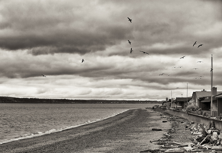 "Reminiscent of Alfred Hitchcock's ""The Birds"", seagulls fly circular patterns along the shore of Bush Point, in Whidbey Island, Washington State."
