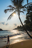 Mirissa Beach at sunset, a female tourist underneath a palm tree at sunset, South Coast of Sri Lanka, Southern Province, Asia. This is a photo of a female tourist walking underneath a palm tree at sunset on Mirissa Beach, South Coast of Sri Lanka, Southern Province, Asia.
