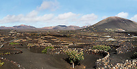 General view of vines growing in volcanic lapilli in the La Geria region, Lanzarote, Canary Islands, Spain, pictured on November 26, 2010 in the afternoon. The low, curved walls are traditionally used to protect the vines from the constant wind. Lanzarote, the Easternmost of the Canary Islands, lies 125km East of the African coast, in the Atlantic Ocean. Like the other islands in this autonomous Spanish archipelago, Lanzarote is originally Volcanic. Picture by Manuel Cohen.