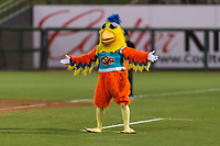 The San Diego Chicken, also known as the Famous Chicken or just The Chicken, questions a call by the home plate umpire as he coaches first base during the Fall Stars game at Surprise Stadium on November 3, 2018 in Surprise, Arizona. The AFL West defeated the AFL East 7-6 . (Zachary Lucy/Four Seam Images)
