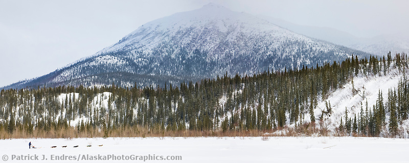 Panorama of recreation dogmusher on the Koyukuk River, Brooks Range, Arctic, Alaska.