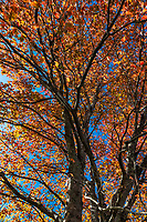Colorful autumn tree detail.