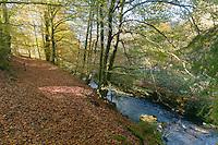 Plateau de Millevaches<br /> La Vézère comporte plusieurs bras à cet endroit