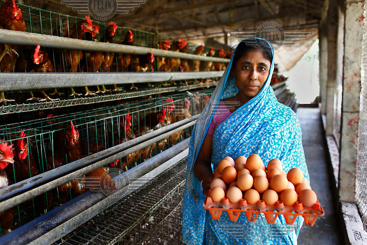 40 year old Najma Begum with a tray of eggs collected from her chicken farm...