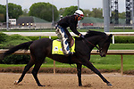 April 26, 2019 : Sueno works out at Churchill Downs, Louisville, Kentucky, preparing for a start in the Kentucky Derby. Owner Silverton Hill LLC, trainer J. Keith Desormeaux. By Atreides x Class Above (Quiet American) Mary M. Meek/ESW/CSM