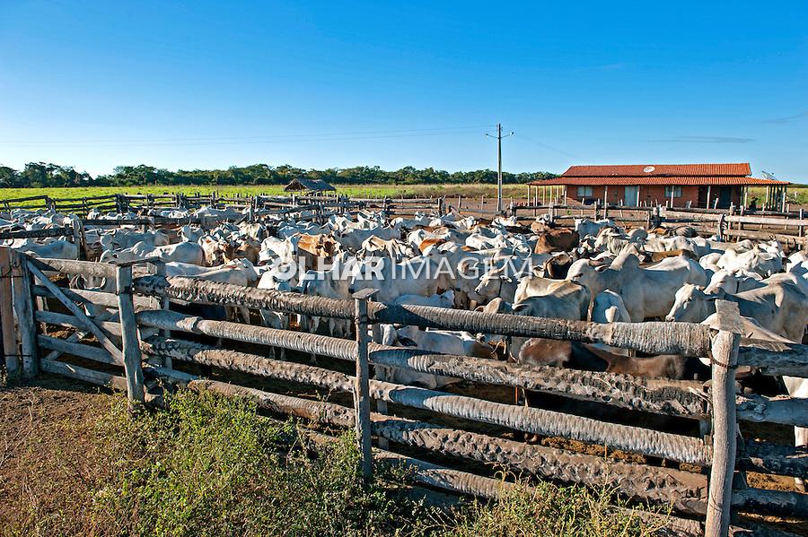 Criaçao de gado em fazenda, Olho D'Agua do Piaui. Piaui. 2014. Foto de Candido Neto.