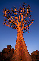 African-FLORA-trees-plants-flower