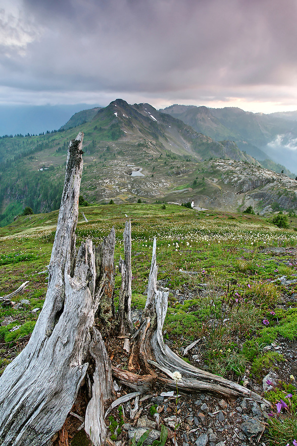Tree stump, meadow and mountains below cloudy sky viewed from Yellow Aster Butte, North Cascades, Whatcom County, Washington, USA