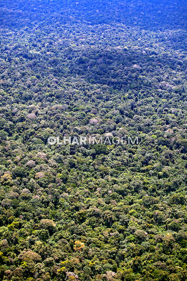 Floresta Amazonica. Parque Nacional Montanhas do Tumucumaque. Amapa. Foto de Rogerio Reis.