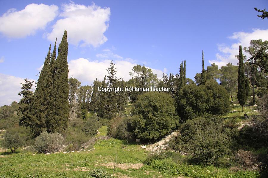 Israel, Shephelah, trees in Beth Gemal