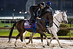 November 1, 2018: Chanteline, trained by Steven M. Asmussen, exercises in preparation for the Breeders' Cup Turf Sprint at Churchill Downs on November 1, 2018 in Louisville, Kentucky. Alex Evers/Eclipse Sportswire/CSM