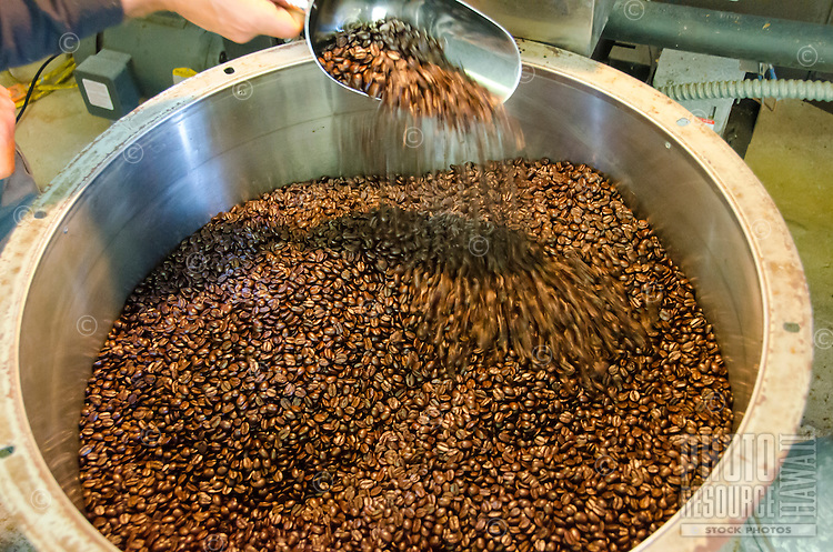 Owner Kaleo turning over roasted coffee beans as they cool, Kaleo's Koffee, Pua'a Kea Farm, Pa'auilo, Big Island.