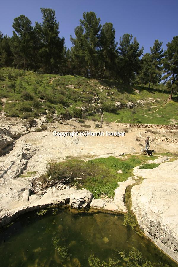 Isarael, Upper Galilee, Ein Navoraya by Biria forest Scenic Route