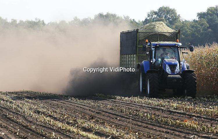 Foto: VidiPhoto<br /> <br /> RENKUM - Loon- en grondverzetbedrijf E. J. G. Gerritsen uit Renkum is vrijdag als eerste agrarisch bedrijf begonnen met het binnenhalen van 22 ha. ma&iuml;s. Dat is nodig als wintervoorraad voor zijn eigen ros&eacute;kalveren. De vroege oogst is nodig vanwege de droogte in combinatie met de hoge zandgronden waarop de ma&iuml;s verbouwd is. Veel blad is al geel. Zodra het gaat regenen ontstaat er zwarte ma&iuml;s met daardoor minder voedingswaarde. De ma&iuml;soogst begint normaal gesproken rond half september.