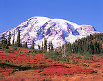 autumn meadow on Mt Rainier, Mt Rainier National Park, Washington State